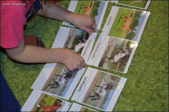 umaszczenie koni - karty