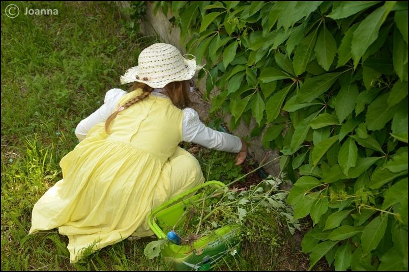 Zbieranie roślin