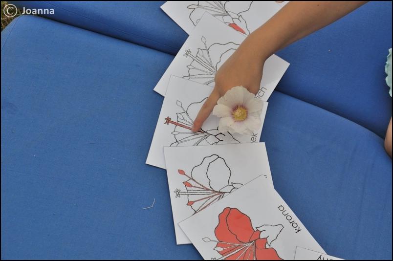 karty i kwiaty