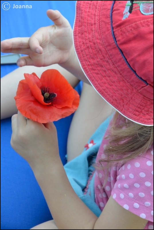 oglądanie kwiatów