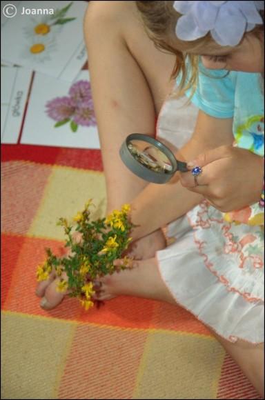 kwiatostany - dopasowanie roślin