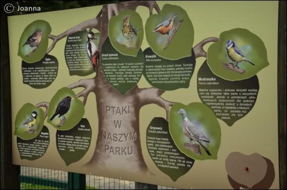 tablica - ptaki