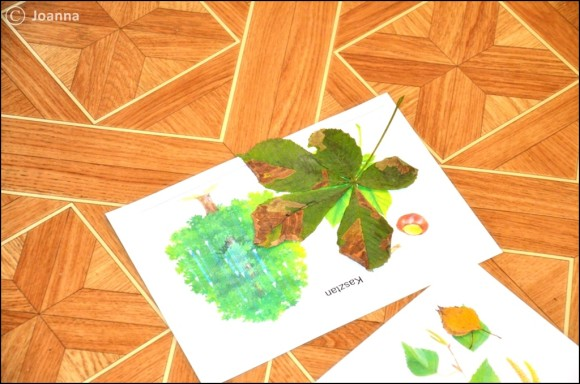 dopasowanie liści