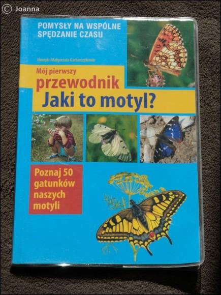 Jaki to motyl. Przewodnik