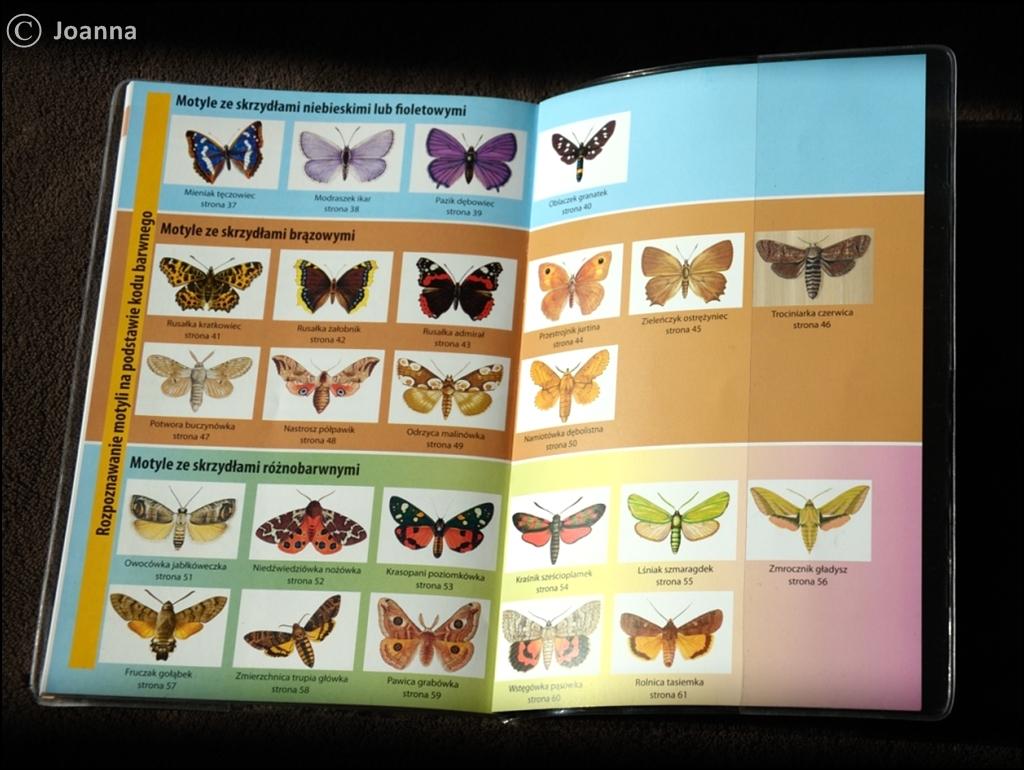 zestawienie motyli