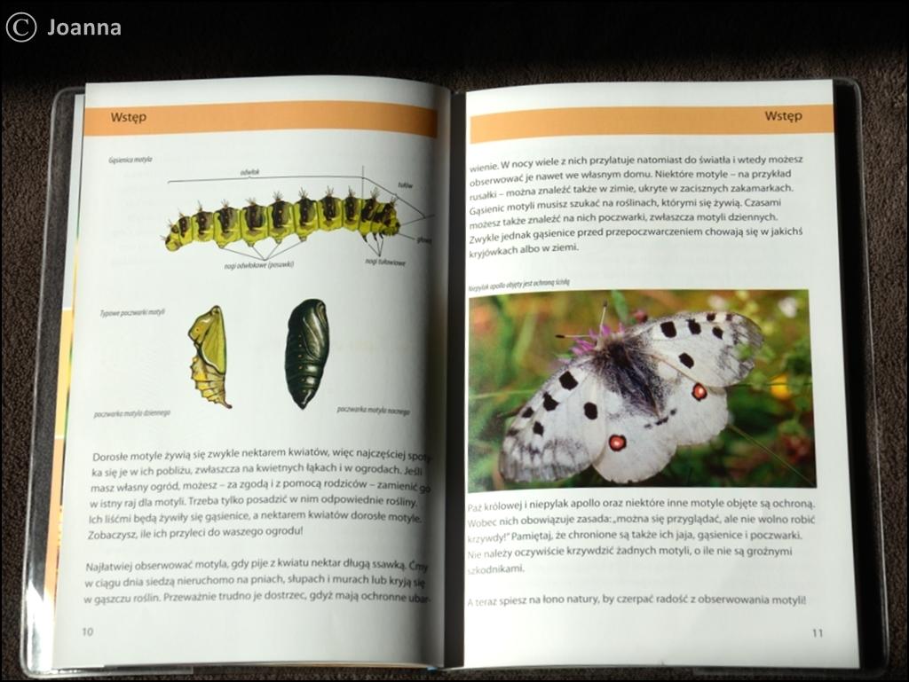cykl rozwojowy motyla