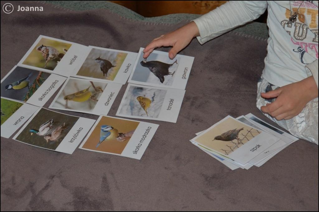 ptaki zimujące i ptaki migrujące