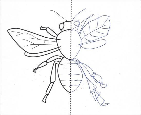 pszczoła - symetria