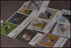 ptaki zimujące i migrujące - dopasowanka montessori
