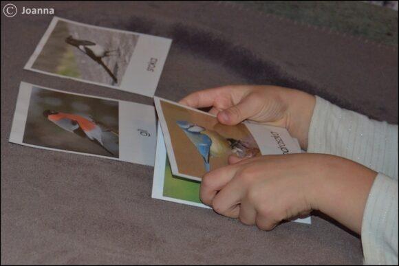 ptaki Polski - praca z kartami