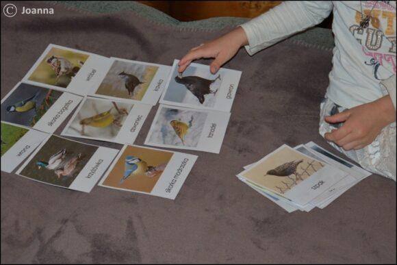 ptaki zimujące - karty