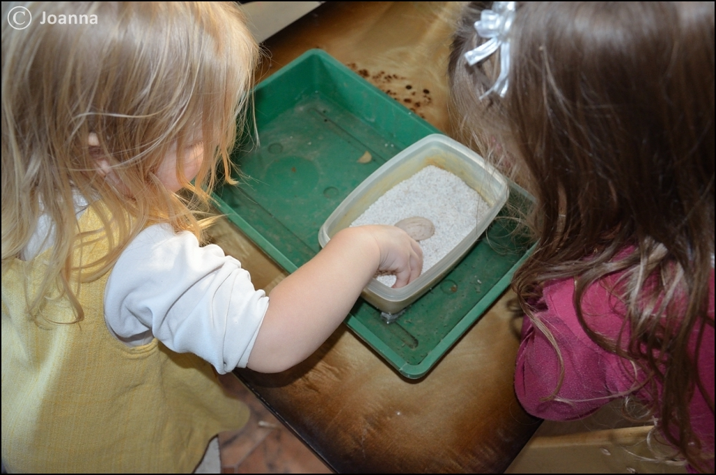 jajo żółwia stepowego w inkubatorze