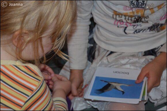 ptaki odlatujące - praca z kartami
