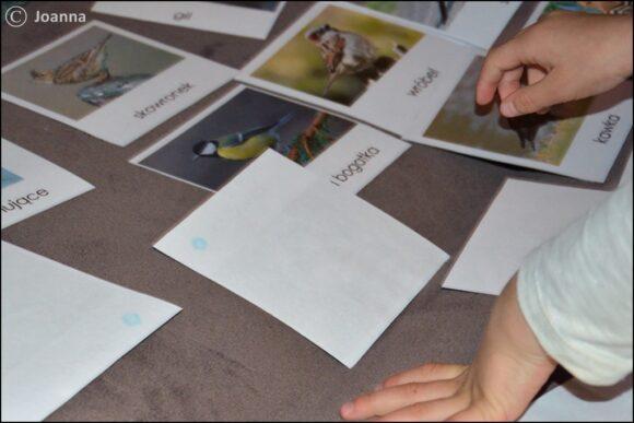 ptaki zimujące i ptaki odlatujące - praca z kartami