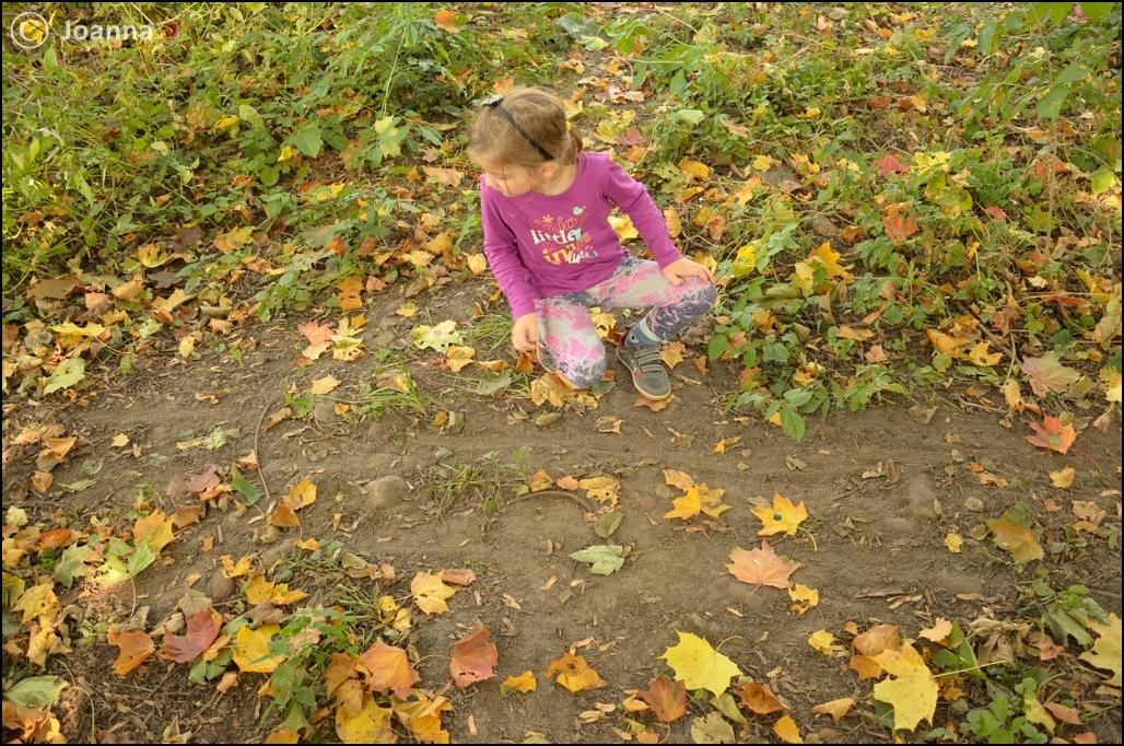 ślady ciągnięcia gałęzi przez bobry