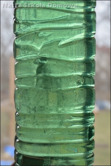meduza w butelce
