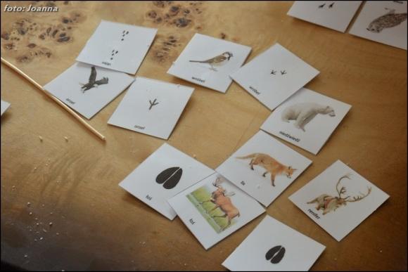 zestaw kart zwierzęta i ich tropy