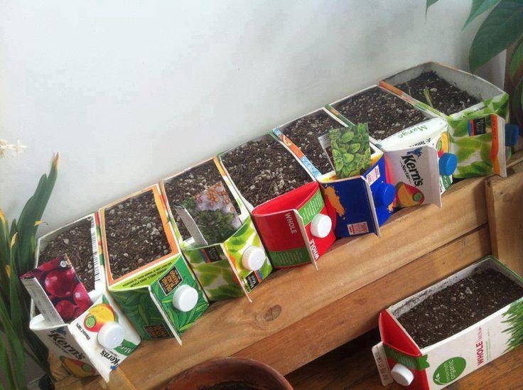 sianie roślin w pudełkach tera pak