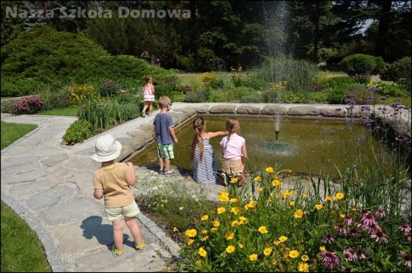 fontanna wśród kwiatów