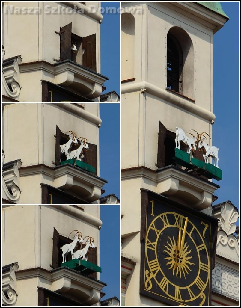 Poznańskie koziołki z ratuszowej wieży