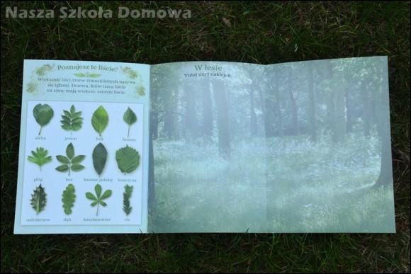 Zajrzyjmy do lasu - Olesiejuk