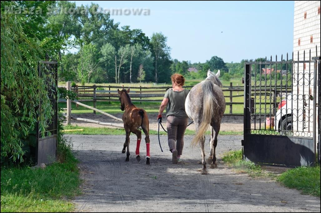 W drodze na pastwisko