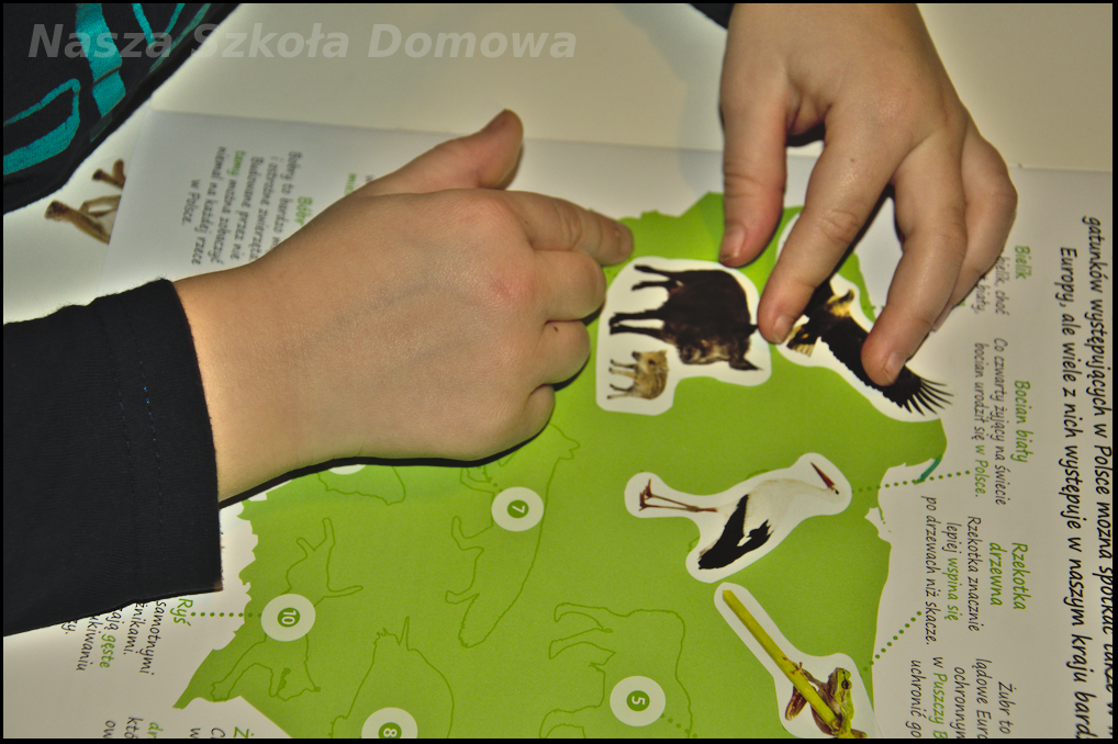 Mapa Polski - zwierzęta