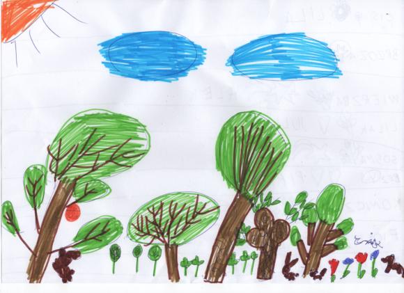 drzewa w Polsce