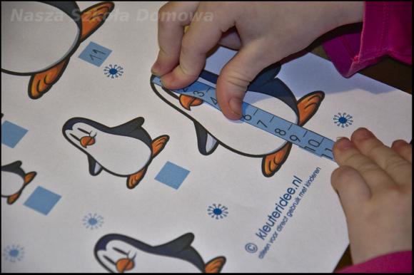 pingwiny - pomiary