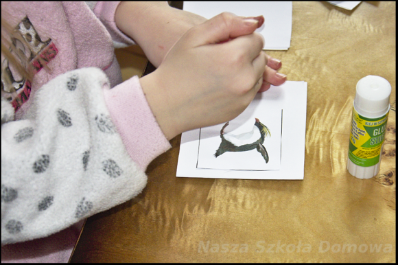 mini-książeczka o pingwinach