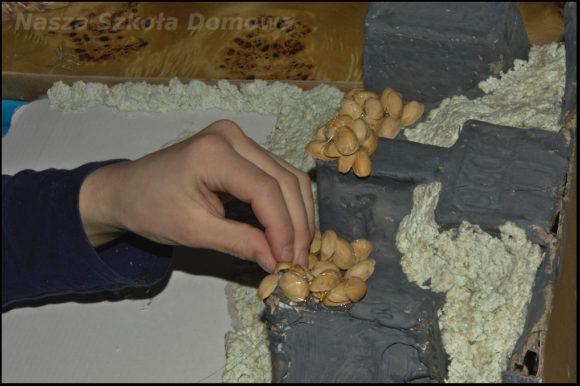 Makieta - śnieżne czapy z łupin orzechów pistacjowych