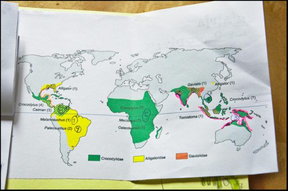 krokodyla - mapa
