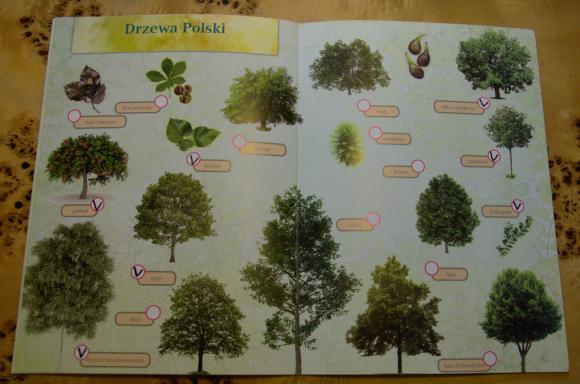 Drzewa Polski - wnętrze
