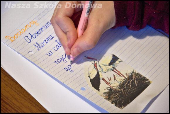 bocian biały notatka