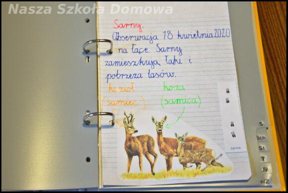 sarna - notatka
