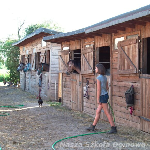 Pojenie koni w stadninie