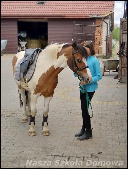 lekcja jazdy konnej w Kucykowej Zagrodzie