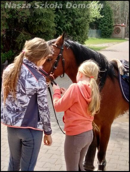 Koń - zakładanie ogłowia