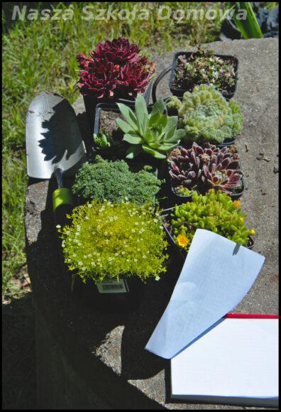 Zakupione rośliny na skalniak