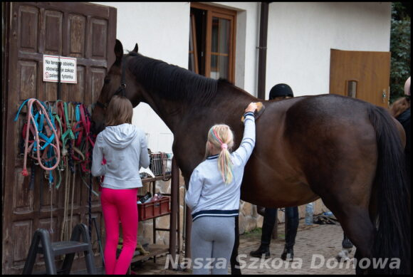 czyszczenie konia